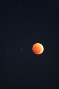 "A ""blood moon"" in eclipse"