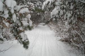 Pine Tree Loop trail, Sarrett Nature Center