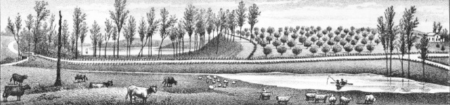 Smith's orchard on Heathering Hill, Watervliet Twp. ca. 1880